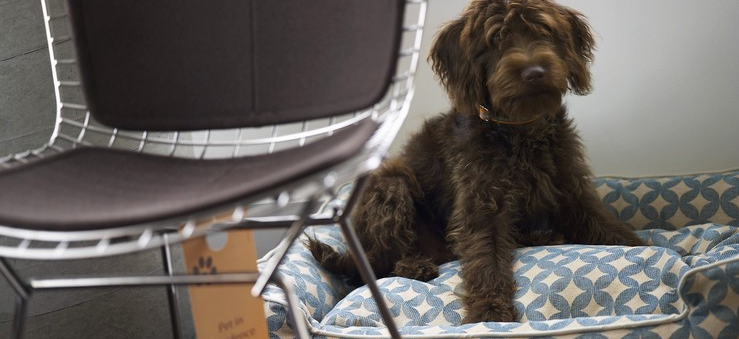 Getting comfy on the rrganic, allergy-free doggie beds  at The James Hotels, New York & Chicago