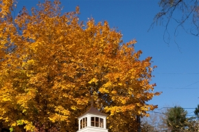 Autumn in New England—Foliage, Apples and Architecture