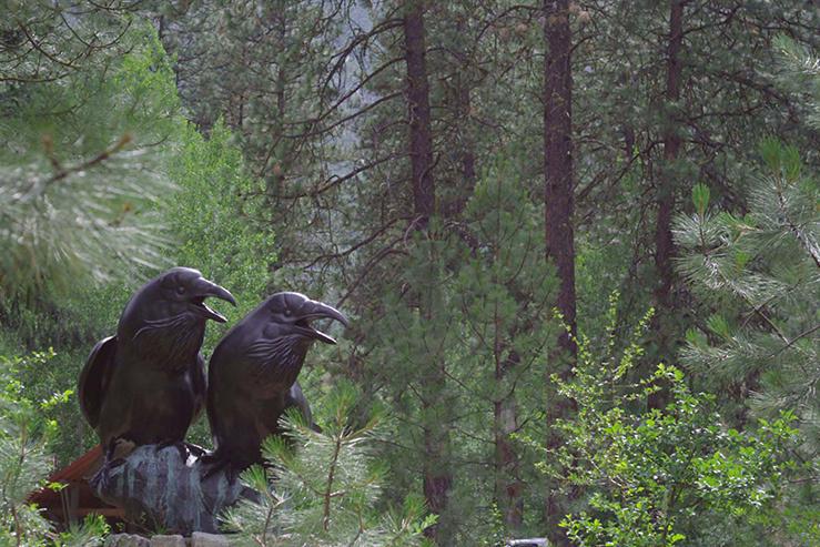 Crows, Tony Angell, Sleeping Lady Resort, Leavenworth WA