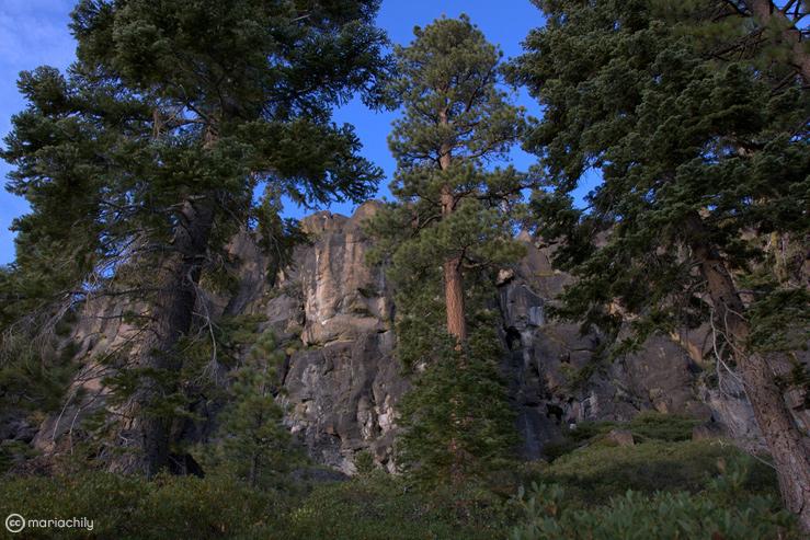 trees_739x493