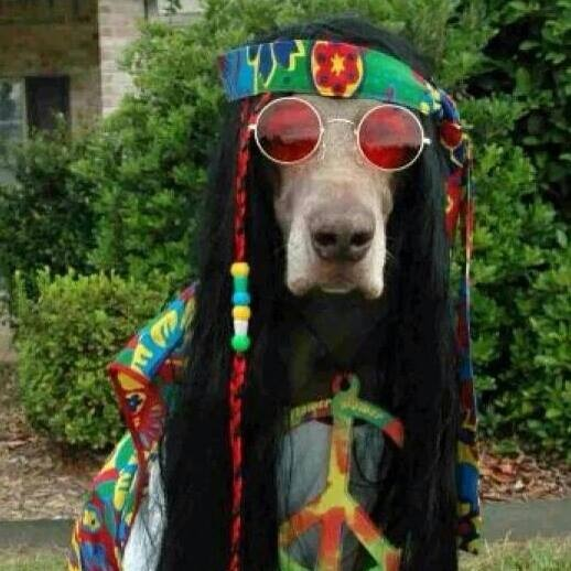 The Essex Hippie Dog