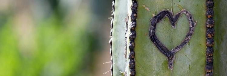 rf-cactus-with-heart-fb.jpg.1340x450_0_230_19142